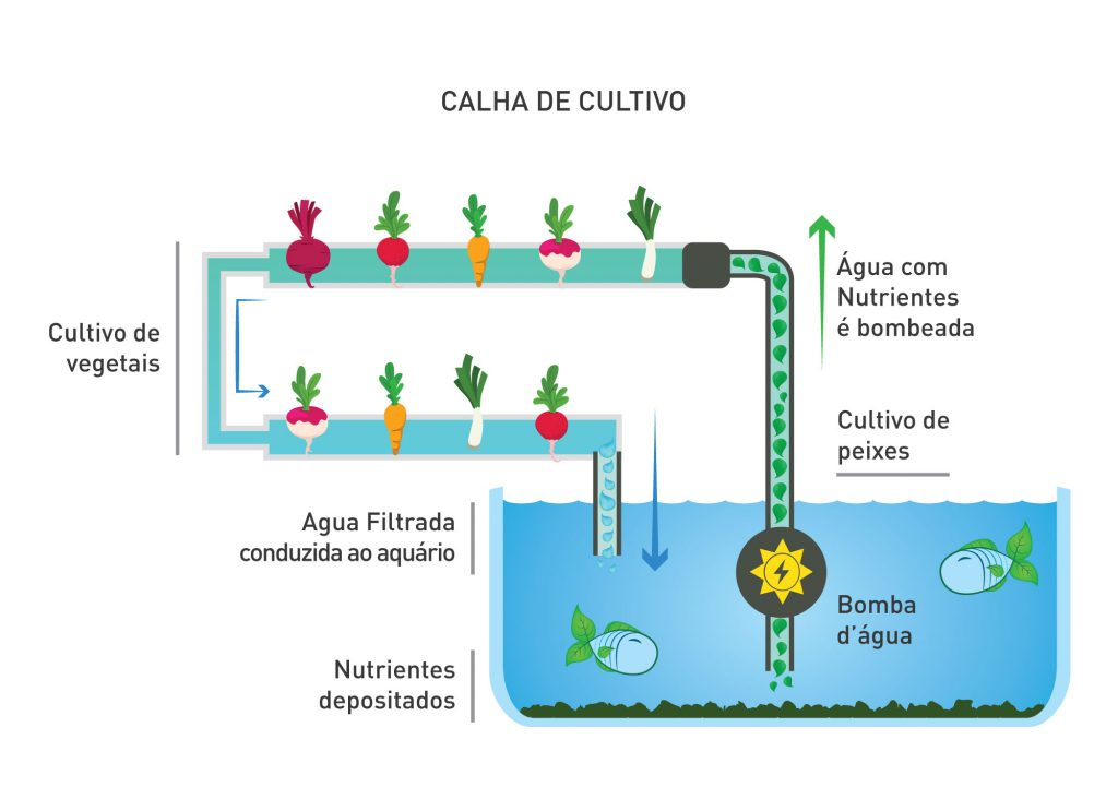 Calha-de-cultivo