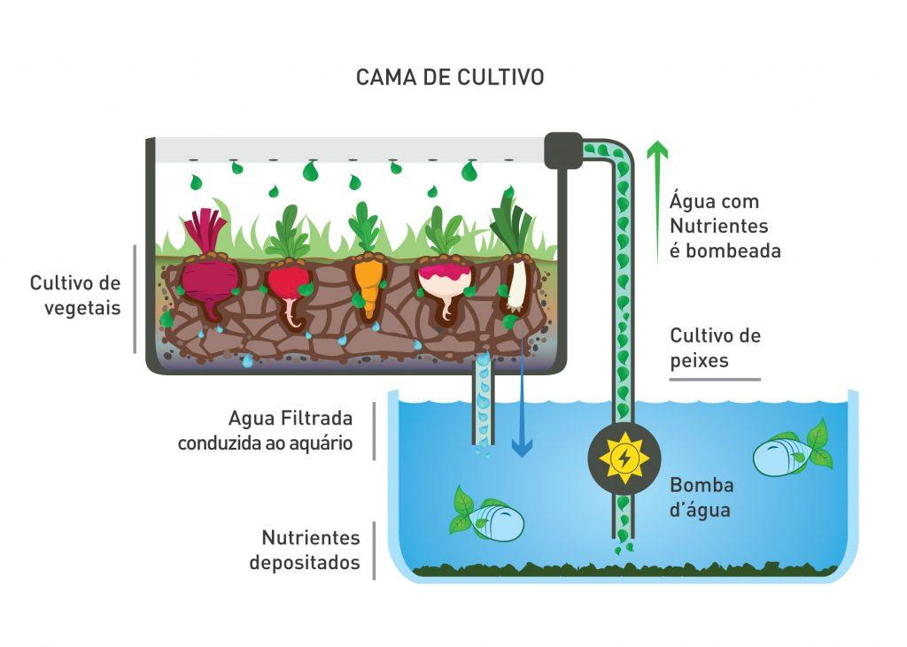 Cama-de-cultivo